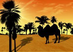 Kronprinz von Dubai kauft ein Kamel für 1,7 Millionen Euro