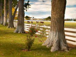 ehemalige Ranch von Casino König Bill Harrah zum Verkauf
