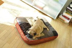 orthopädisches Hundekissen von pet-interios
