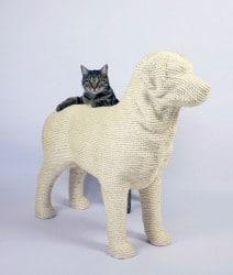 die Katze ist auf den Hund gekommen