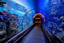 Mandalay Bay Sharkreef Aquarium in Las Vegas (Quelle: artoftravel.de)