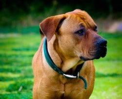 Hochwertiges Bio Hundefutter von Terra Canis