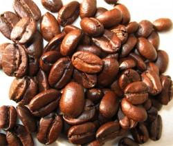 Kopi Luwak - Teuerster Kaffee Welt