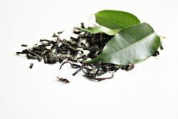 Getrocknete und frische Teeblätter