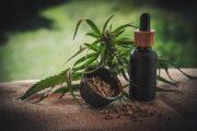 Cannabis als echter Allrounder für einen nachhaltigen Lebensstil