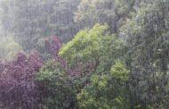 Rain Sounds Ambience - Regengeräusche für viele Gelegenheiten